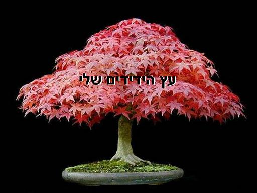 עץ הידידים שלנו