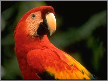 תמונות טבע מדהימות של חיות בר
