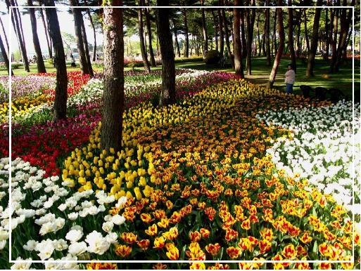 גנים בהולנד