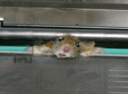 בעיה במדפסת או בעכבר
