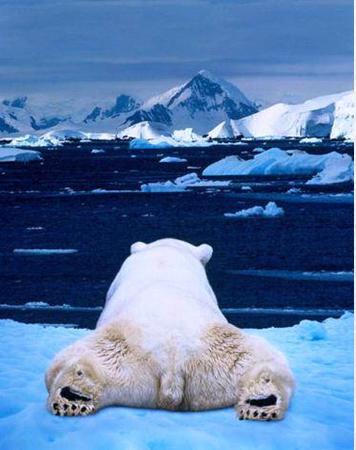 בירכתו של דוב הקוטב