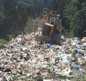 זיהום על ידי שקיות פלסטיק