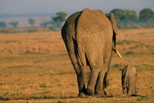 הפיל בקרקס