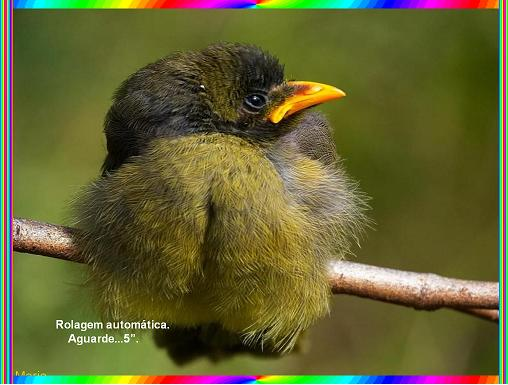 ציפורים של אוסטרליה