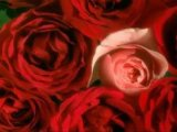 BEAUTIFULL ROSES