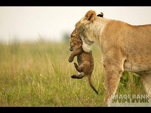 אמהות מכל הסוגים