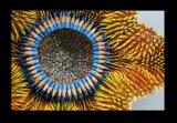 אומנות עפרונות