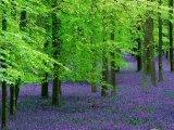יערות מיסטוריים - יערות מהאגדות