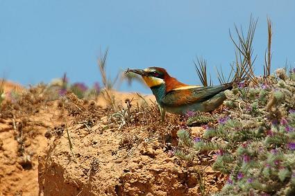 ציפורים פולשות ואחרות בפארק הירקון - אורי קולקר