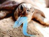 שקיות פלסטיק