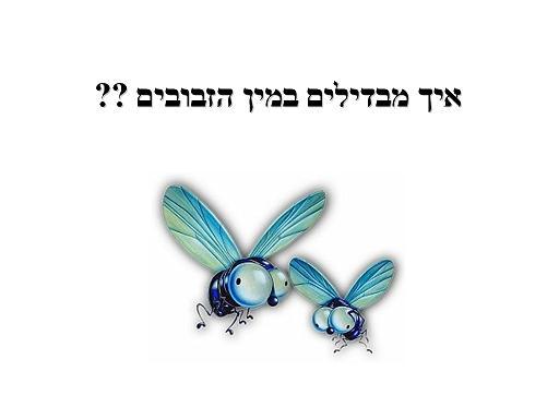 איך מבחינים בין זבוב לזבובה