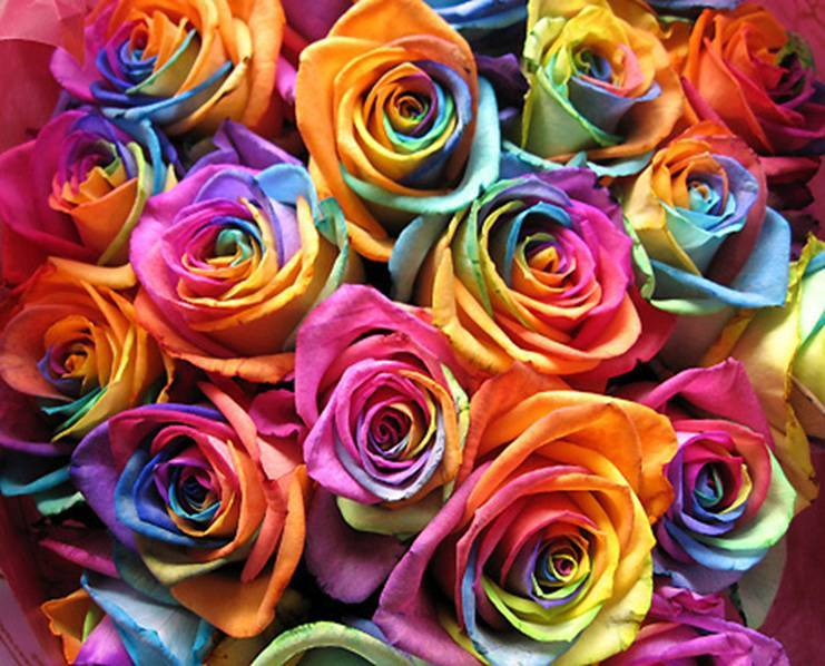 Ten Roses For you!