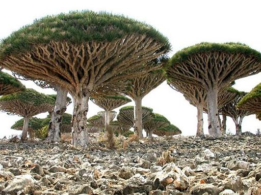 האי סוקוטרה דרומית לתימן