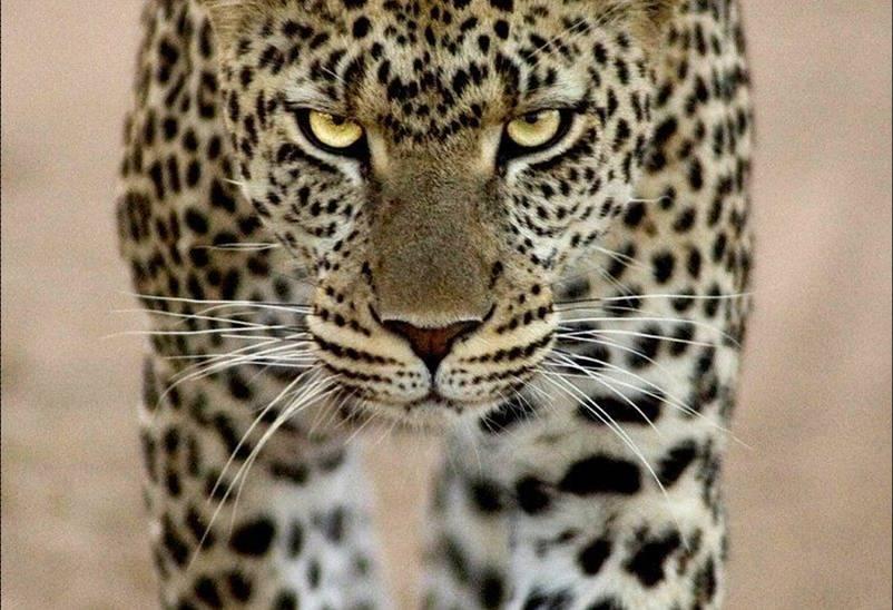 תמונות בעלי חיים