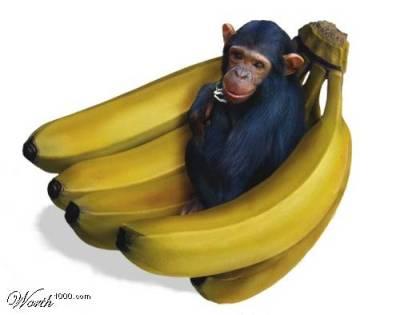 מעשה בחמישה קופים