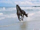 מצגת מדהימה על סוסים