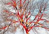 עצים סרוגים...