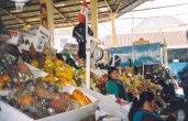 ביקור  בשווקים