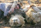 הלוחש לאריות