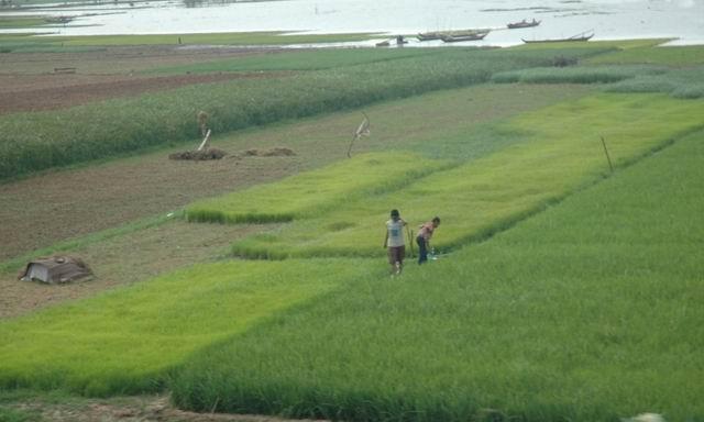 ניחוחות מן המזרח- וייטנאם- המקונג – סם החיים של הדרום