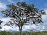 מאיזה עץ אתם עשויים?