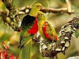 ציפורים בשלל צבעים מרהיבים - הרומנטיקה של הטבע