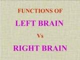 האונה השמאלי והאונה הימנית של המוח