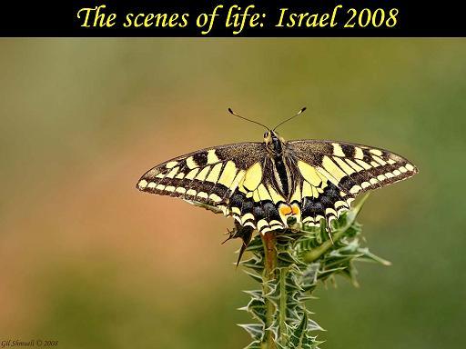 תמונות ישראליות 2008