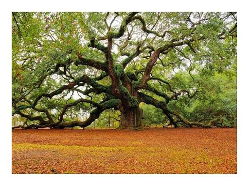 """""""כי האדם  עץ השדה"""" - תמונות מדהימות של עצים"""