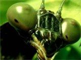 חרקים גדולים מהחיים