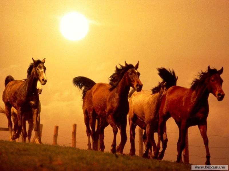 ירושת סוסים