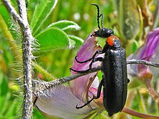חרקים ענקיים