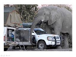 קמפינג באפריקה