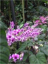 תמונות פרחים אקזוטיים