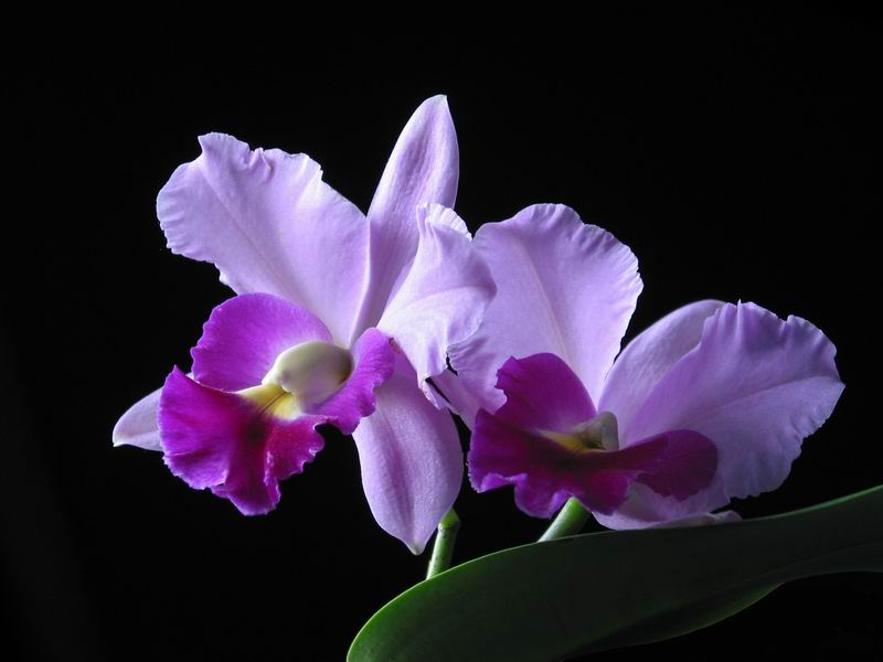 Orchids of Vietnam
