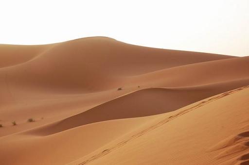 מרוקו - מדיונות הסהרה עד ארמונות השייש