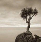 עצים מיוחדים בעולם