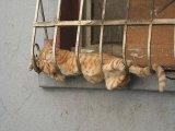 חתולים עצלנים - כלבים משוגעים