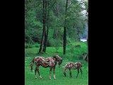 יצירות חיות משורשי עצים