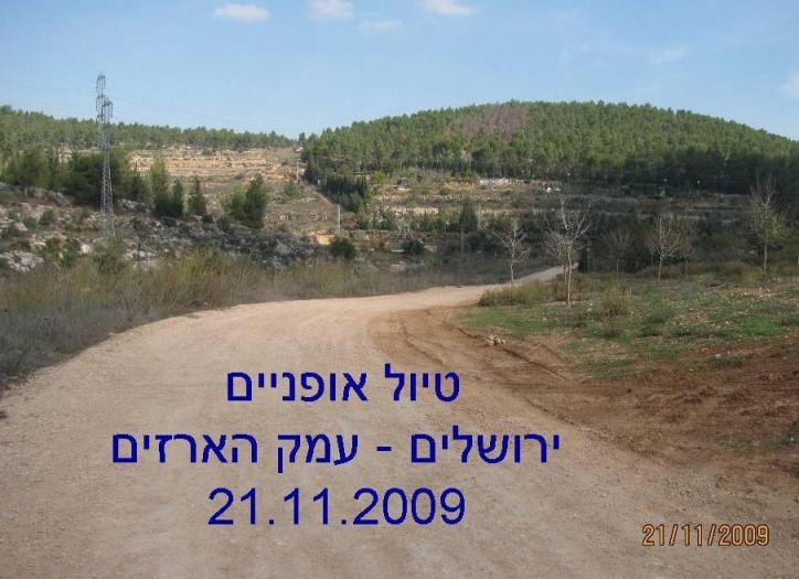 ירושלים - עמק הארזים