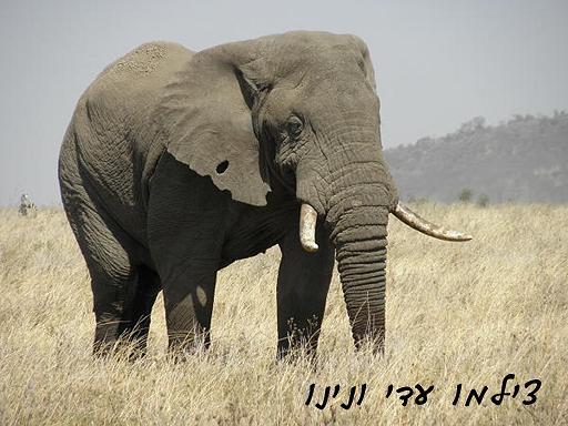 טנזניה - צילמו  עדי ונינו