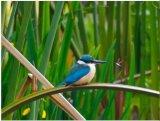 ציפורים מאוסטראליה