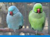 זוגות של ציפורים