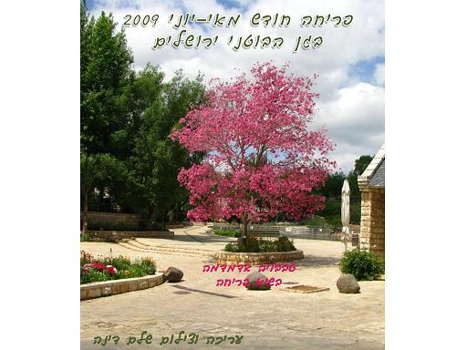 פריחה בחודש  מאי ויוני 2009  בגן הבוטאני בירושלים