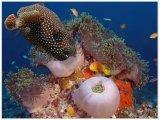 חיים מתחת הים אילת