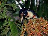 ציפורים בגן עדן