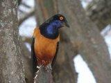 ציפורים בטנזניה