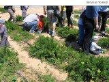 שביל הסלט -  קטיף של ירקות ופירות ישר מן השדה