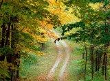 חלומות ביער