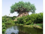 העץ החרוט